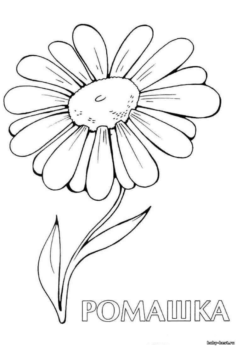 Раскраски цветы   Картинки с цветами для раскрашивания, а ...